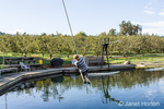 Young woman enjoying swinging on a rope swing over a farm pond