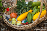 Basket of freshly harvested produce, including lemon and green cucumbers, yellow summer squash, strawberries and tomatoes