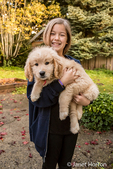 Ten year old girl holding a 10 week old Goldendoodle puppy in Issaquah, Washington, USA