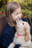 Ten year old girl being licked by a 10 week old Goldendoodle puppy in Issaquah, Washington, USA