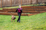Four month old Rhodesian Ridgeback puppy chasing a ten year old girl outside in Issaquah, Washington, USA