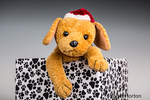 Stuffed dog wearing Santa hat, sitting in a box covered by paw prints