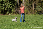 Woman throwing treats for her dog, Zipper, a Westie, in Issaquah, Washington, USA