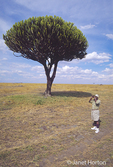 Candelabra (Euphorbia candelabrum) tree and a man  with binoculars, looking for wildlife in the Upper Maasai Mara, Kenya