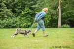 Dashiell, a three month old Alaskan Malamute puppy running with his owner at a local park