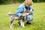 Dashiell, a three month old Alaskan Malamute puppy being praised by and getting affection from his owner