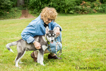 Dashiell, a three month old Alaskan Malamute puppy being praised by and getting affection from his owner in Issaquah, Washington, USA