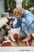 """Dashiell, a three month old Alaskan Malamute puppy practicing a """"watch me"""" command"""