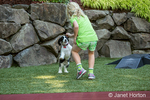 Seven year old girl playing with her two month old Springer Spaniel puppy, Tre