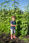 Four year old boystanding next to Goodmother Stollard purple pole beans