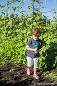 Four year old boy walkng next to Goodmother Stollard purple pole beans