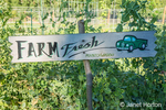 """Farm Fresh"" sign in front of a bed of sugar snap pea plants"