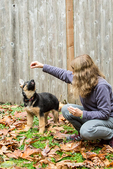 Woman training her three month old German Shepherd, Greta