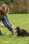 Woman playing with her ten week old Bernese Mountain puppy, Winston, in the park