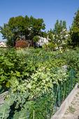 Squash, broccolli and other veggies growing