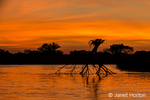 An upside-down tree in the Cuiaba river at sunset