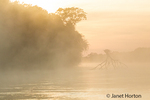 Early morning fog surrounding an upside down tree in the Cuiaba River