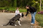 """Six month old Great Dane puppy, Athena, being trained to do the """"shake"""" command"""