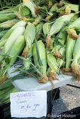 Stack of organic sweet corn for sale at a Farmers Market