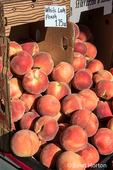 Boxes fo White Lady peaches for sale at a Farmers Market in Issaquah, Washington, USA