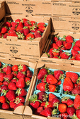 Pints of strawberries for sale at a Farmers Market