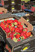 Pints of strawberries, blueberries and blackberries for sale at a Farmers Market