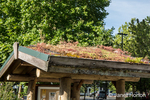 Living or green roof at the Cedar River Watershed Education Center i