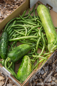 Box of freshly harvested green beans, cucumbers and green zucchini