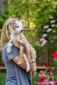 """Mini Australian Shepherd puppy """"Flynn"""" being held by his owner"""