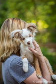 "Mini Australian Shepherd puppy ""Flynn"" being held by his owner"