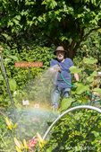 Man hand-watering his vegetable and flower garden in Bellevue, Washington, USA