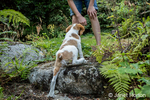 "Ten year old girl calling her two month old Brittany Spaniel ""Archie"" to come to her, as it struggles to climb up the rocks, in Issaquah, Washington, USA"