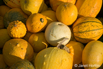 Miscellaneous gourds and squash at a pumpkin patch in Half Moon Bay, California, USA