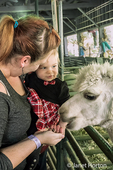 Mother and 11 month old daughter feeding an alpaca