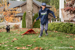"""Shadow"", a three month old black Labrador Retriever puppy, chasing after a twelve year old pulling a rake behind him, in Bellevue, Washington, USA"