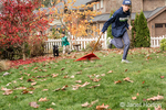 """Shadow"", a three month old black Labrador Retriever puppy, chasing after a twelve year old boy pulling a rake behind him in Bellevue, Washington, USA"