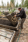 Man dumping a wheelbarrow of compost onto a raised garden bed in a community garden in Isssaquah, Washington, USA