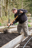 Man using a garden fork to lightly mix in a layer of compost into the soil in a community garden in Isssaquah, Washington, USA.  Other names for a garden fork are digging fork, four-tined fork and spading fork.