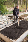 Man using a garden rake to level a freshly composted raised garden bed in a community garden in Isssaquah, Washington, USA