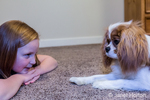 "Cavalier King Charles Spaniel puppy ""Bode"" staring at his young owner in Maple Valley, Washington, USA"