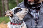 "Man holding ""Lilly"", his 10 week old Australian Cattledog puppy in Issaquah, Washington, USA."