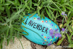 Decorative painted rock to identify a Lavender plant.