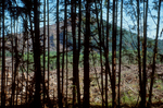 Logging, Washington State, clear-cut hill screened by forest buffer, Olympic Peninsula, Washington State, Pacific Northwest, USA,