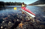 Queen Charlotte Islands, Sea Kayaker, intertidal life, Dolomite Narrows, Haida Gwaii, British Columbia, Canada, 