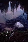 1655 Olympic National Park, Grand Lakes Basin, lake shore reflection of sunset sky, summer. Olympic Peninsula, Washington State, Pacific Northwest, USA,