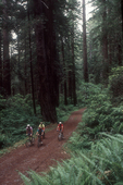 Redwoods, California, mountain bikers, Jedediah Smith State Park, mature old growth trees, forest road,