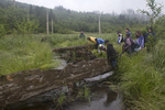 Students assessing streamside re-forestation, field trip on a rainy day, Swan School. Fifth and Sixth Grade classes, Lowell Jons, teacher, Tarboo Creek habitat restoration, Northwest Watershed Institute, Dabob Bay, Hood Canal, Puget Sound, Washington State, Washington Wildlife and Recreation Program, WWRP,