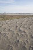 Hanford Reach National Monument, Wahluke Slope, sand dunes, grasslands, sagebrush, Columbia Basin, eastern Washington, Washington State, Pacific Northwest, USA, North America,