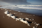 CALIFORNIA - Foam on a sandy beach on the Sanoma Coast.