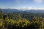 CALIFORNIA - View east from the forested summit of Chemise Mountain in the King Range National Conservation Area.